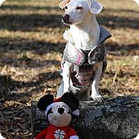 Adopt A Pet :: Andrea/Happy - Conyers, GA
