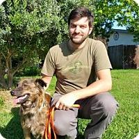 Adopt A Pet :: Martha - Sacramento, CA