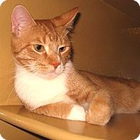 Adopt A Pet :: Grover - Colmar, PA