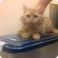 Adopt A Pet :: Romba - McDonough, GA