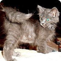 Adopt A Pet :: Blue - Chattanooga, TN