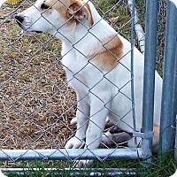 Adopt A Pet :: Cody - Waller, TX