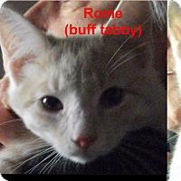 Adopt A Pet :: Elverson Farm Sisters - Colmar, PA