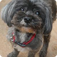 Adopt A Pet :: Timber - Norwalk, CT