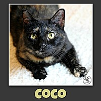 Adopt A Pet :: Cocoa - Indianapolis, IN