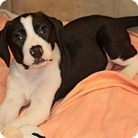 Adopt A Pet :: Cash - Rochester, NY