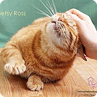 Adopt A Pet :: Betsy Ross - St Louis, MO