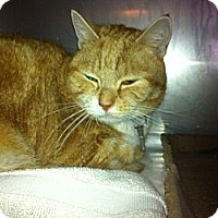Adopt A Pet :: Baylee - Pittstown, NJ