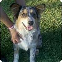Adopt A Pet :: Snowflake - Bakersfield, CA