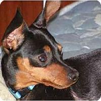 Adopt A Pet :: Mickey - Swiftwater, PA