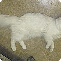 Adopt A Pet :: Chip - East Hanover, NJ