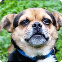 Adopt A Pet :: Bugle - Mocksville, NC
