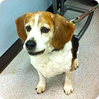 Adopt A Pet :: Neo - Minnetonka, MN