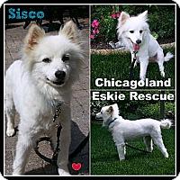 Adopt A Pet :: Sisco - Elmhurst, IL