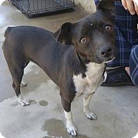 Adopt A Pet :: Juliet - Fowler, CA