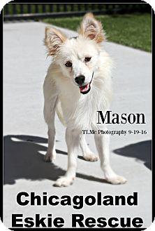 Spitz (Unknown Type, Small) Mix Dog for adoption in Elmhurst, Illinois - Mason