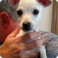 Adopt A Pet :: Sasha - Knoxville, TN