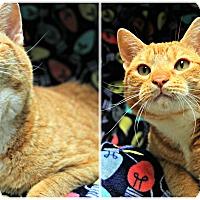 Adopt A Pet :: Charlie Parker - Forked River, NJ