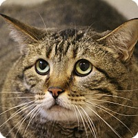 Adopt A Pet :: LK - Colorado Springs, CO