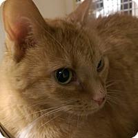 Adopt A Pet :: Bermuda - Bridgeton, MO