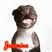 Adopt A Pet :: Jazzmine - Des Moines, IA