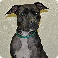Adopt A Pet :: Terry - Port Washington, NY