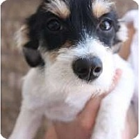 Adopt A Pet :: Riley - Arlington, TX