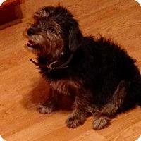 Adopt A Pet :: Snuggles - Marlton, NJ