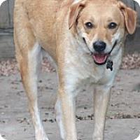 Adopt A Pet :: Freddie - Norwalk, CT