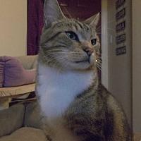 Adopt A Pet :: Irvin - Walla Walla, WA