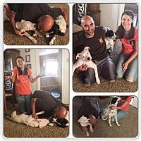 Adopt A Pet :: Jefferson - Sacramento, CA