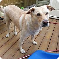 Adopt A Pet :: Sheba - Saskatoon, SK