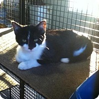 Adopt A Pet :: Swade - Hamilton, ON