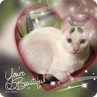 Adopt A Pet :: Natasha - McDonough, GA