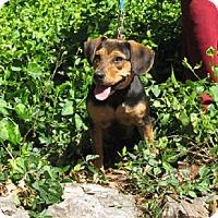 Adopt A Pet :: Rey - Oakland, AR