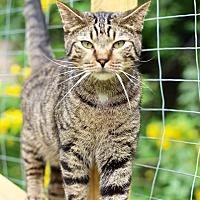 Adopt A Pet :: Jeffrey - San Antonio, TX