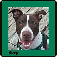 Pit Bull Terrier Mix Dog for adoption in Memphis, Tennessee - Roxie