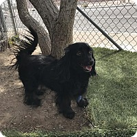 Adopt A Pet :: Lady - Las Vegas, NV