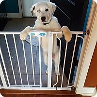 Adopt A Pet :: Tundra - Florence, KY