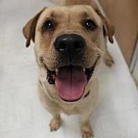 Adopt A Pet :: Jax - Yukon, OK