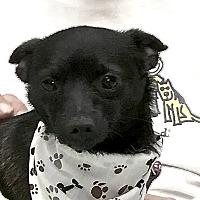 Adopt A Pet :: Taco - Evansville, IN