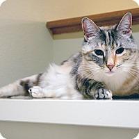 Adopt A Pet :: LuLu - Mission Viejo, CA