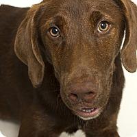 Adopt A Pet :: Java - Baton Rouge, LA