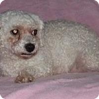 Adopt A Pet :: Ivy - Homer, NY