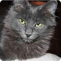 Adopt A Pet :: Louie - Arlington, VA