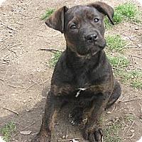 Adopt A Pet :: Mazie - Humboldt, TN