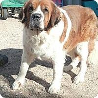 Adopt A Pet :: Nyla - Glendale, AZ