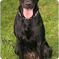 Adopt A Pet :: Tess - Chicago, IL