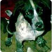Adopt A Pet :: Speckles - dewey, AZ