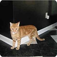 Adopt A Pet :: Rusty - Jeffersonville, IN